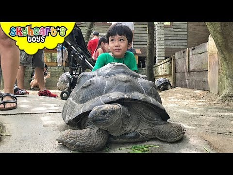 FEEDING ANIMALS IN FARM in the City Malaysia | Zoo Safari petting animals for kids