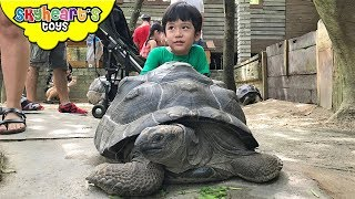 FEEDING ANIMALS IN FARM in the City Malaysia | Zoo Safari petting animals for kids thumbnail