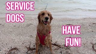 🐕 Service Dog OFF DUTY: Fun at the Beach! 🌊