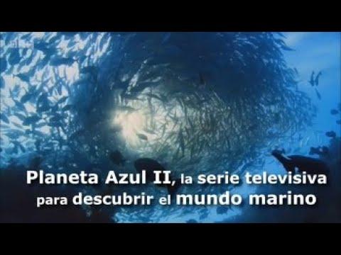 planeta-azul-ii,-la-serie-televisiva-para-descubrir-el-mundo-marino