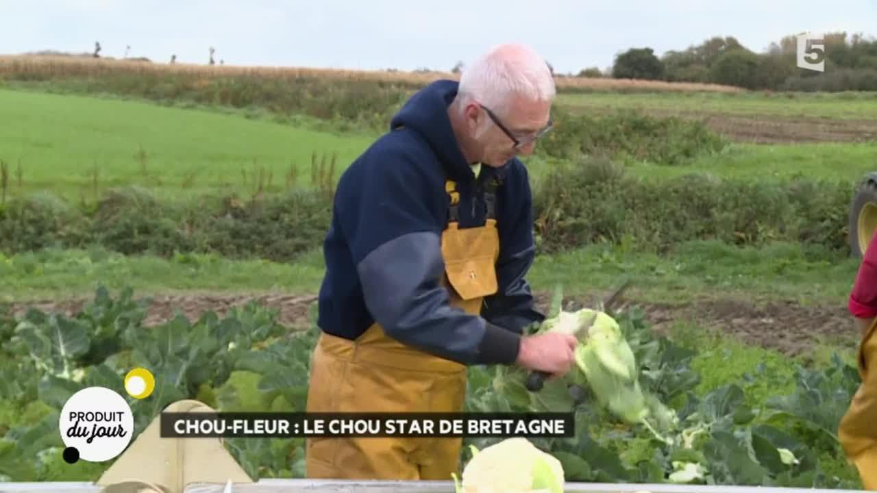 Chou-fleur : le chou star de Bretagne - YouTube