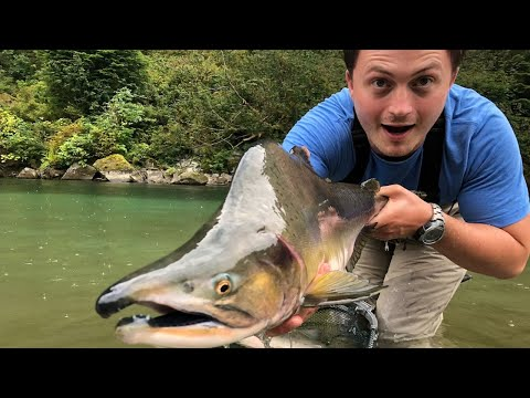 WE CAUGHT A HUNDRED SALMON IN A DAY -- Shore Jigging For Pink Salmon (Part 1)