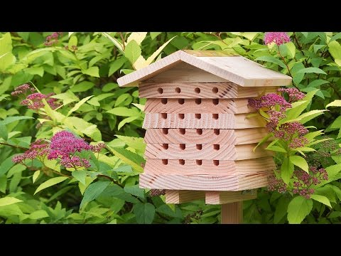 Should you open an Air Bee and Bee?