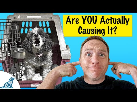 how-to-stop-a-dog-from-barking-in-the-crate---professional-dog-training-tips