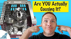 Is Crate Barking Driving You Crazy? Here's What To Do