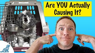Is Your Dog Barking In Their Crate? Here's What To Do