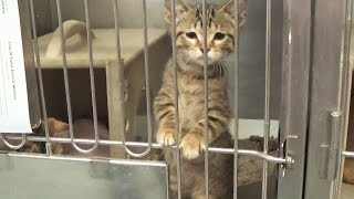 Kitten Season ~ Why We Foster Kittens  The Need For Volunteers  Shelter Tour ~ Litters #9 #10