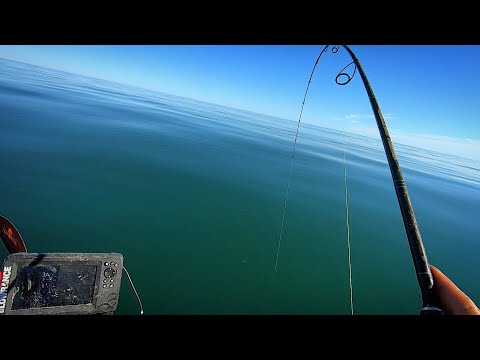 Diverse Fishing On Underwater Rocks + Underwater Camera View