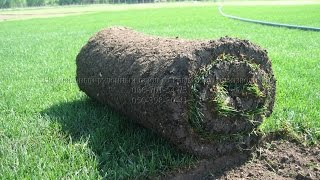 Купить рулонный газон Симферополь, Ялта, Севастополь(, 2014-09-04T16:50:06.000Z)