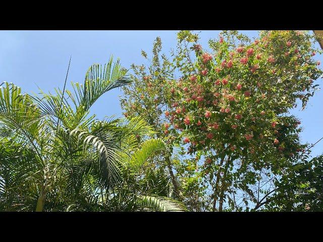 पर्यावरण प्रदूषण का वनस्पतियों  पेड़ पौधों पर असर : NBRI निदेशक प्रोफ़ेसर सरोज के बारीक से बातचीत