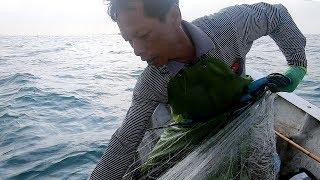 崭新的渔网就是厉害,阿雄去到外海直接爆仓,村里老人们争相购买