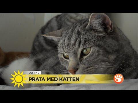 """Lär dig katternas hemliga språk: """"Kurr betyder tack""""  - Nyhetsmorgon (TV4)"""