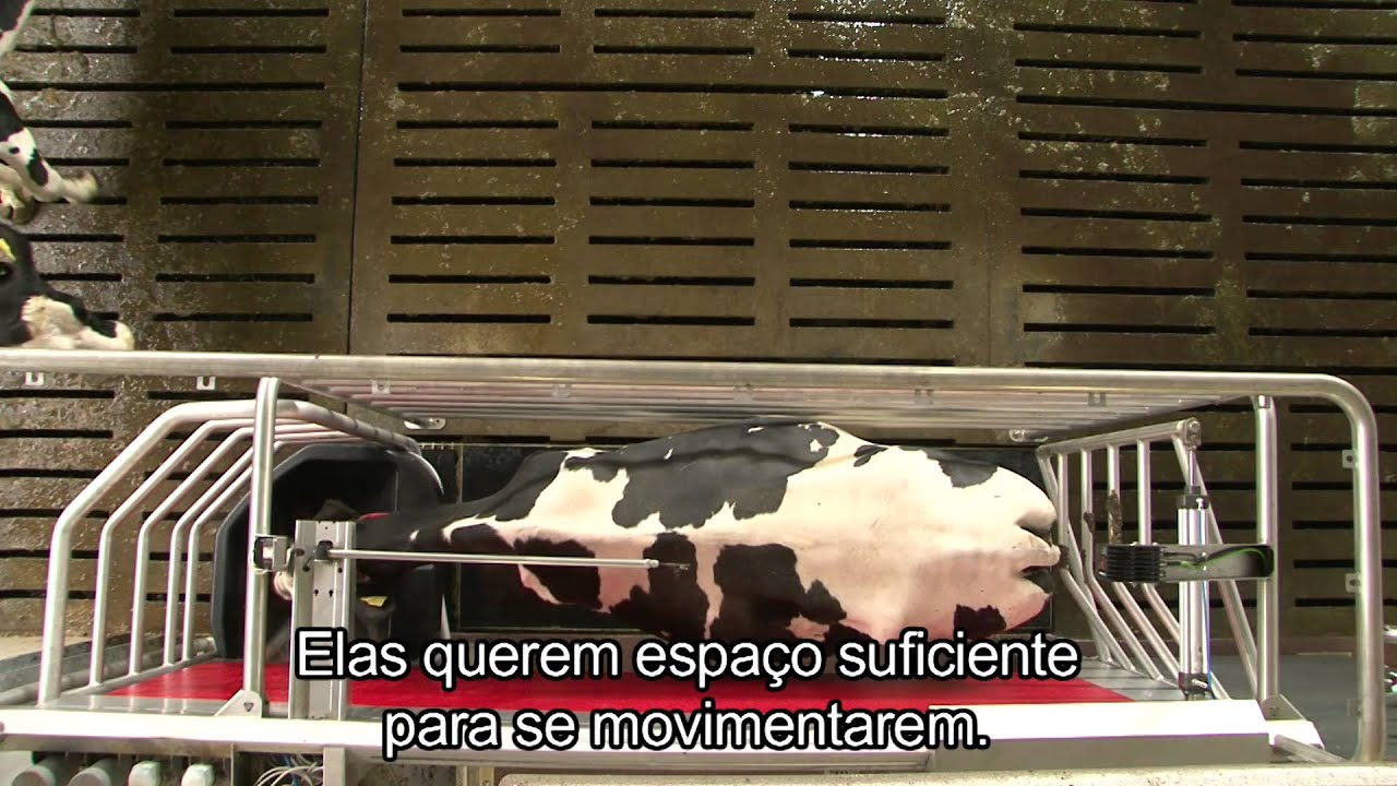 Lely Astronaut A4 - Benefits cow (Portuguese)