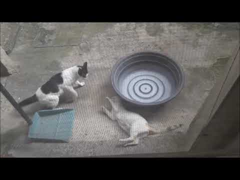 Cats Fighting - 1