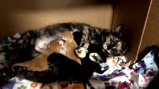 Rescue Beautiful Cat Momma Give Birth A Sassy Group Little Kitten