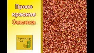 Семена Красного Проса -  Агроэксперт-Трейд