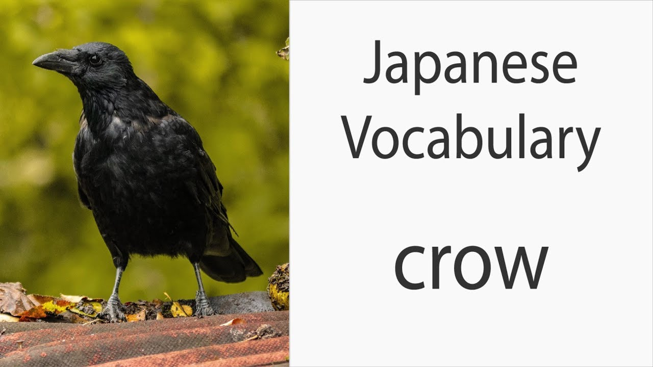 How To Say Crow Raven In Japanese Youtube