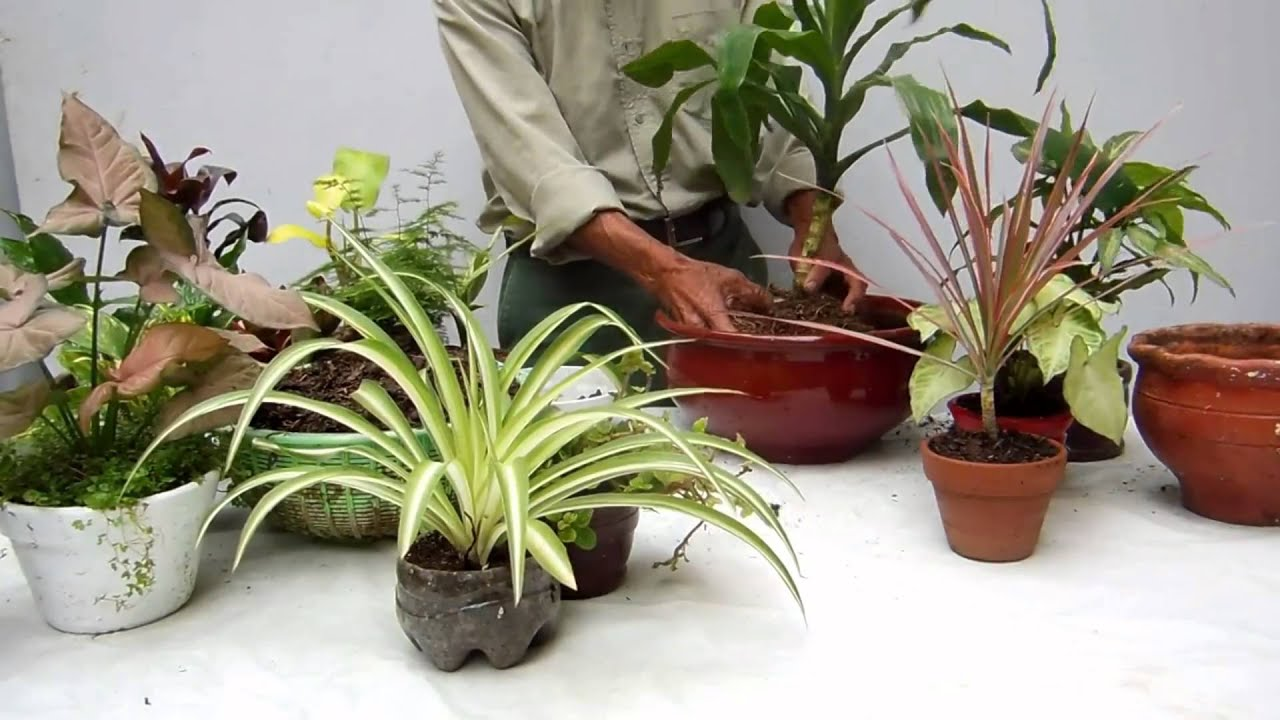Un arreglo con plantas de interior youtube for Plantas decorativas para interiores