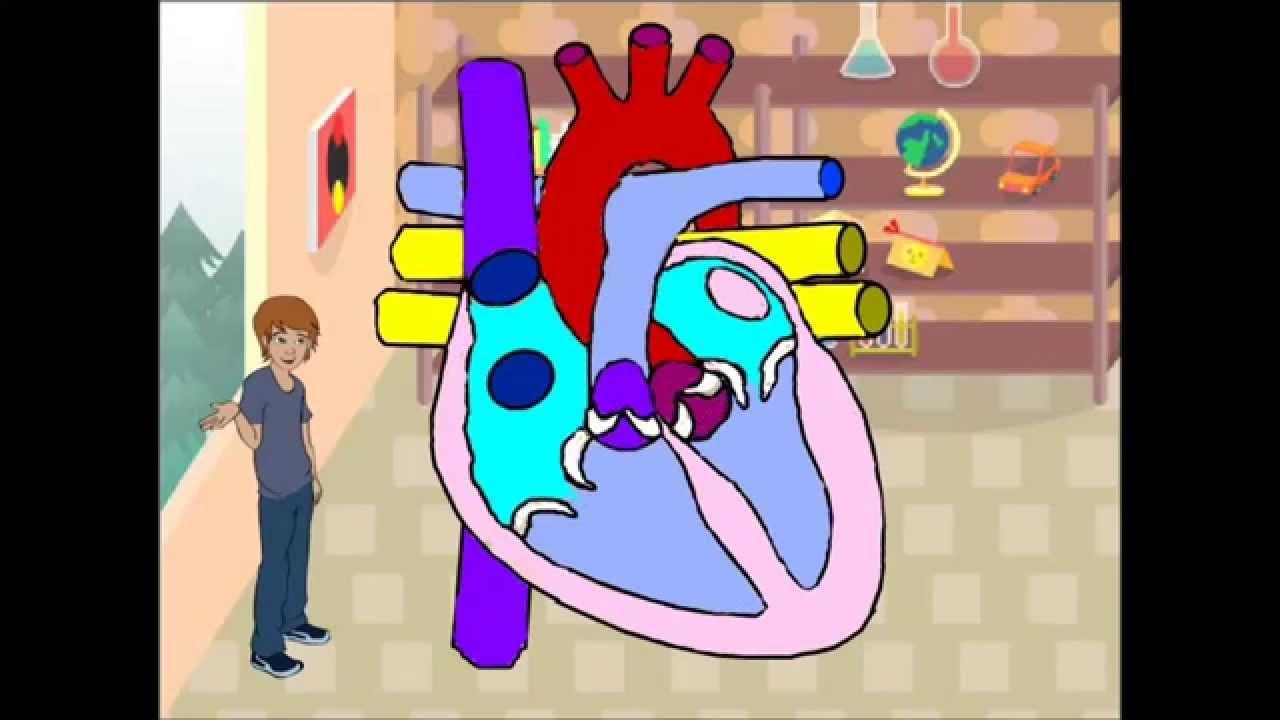 Movimientos Del Corazón Youtube