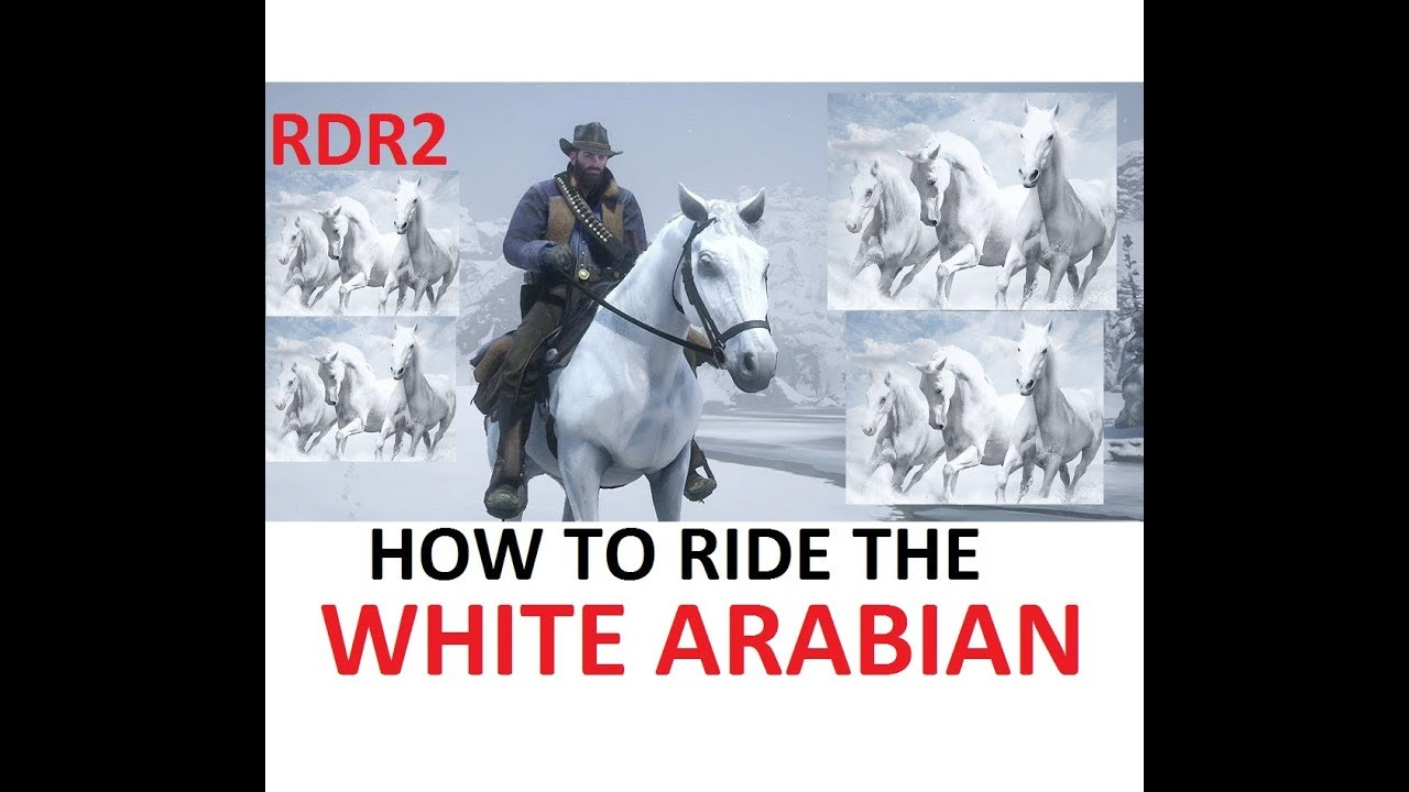 How To Ride The White Arabian Horse Tutorial Never Get Bucked Off
