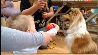Собаки-доктора