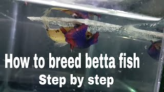 How To Breed Betta Fish Step By Step More Detailed Easy Way Of Breeding A Betta Fish