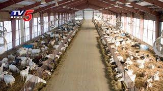 Sheep Farming | Modern Farming Methods | Annapurna | Telugu News | TV5 News