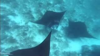 Snorkeling and see The Big manta Reys at Komodo National Park - Manta Point