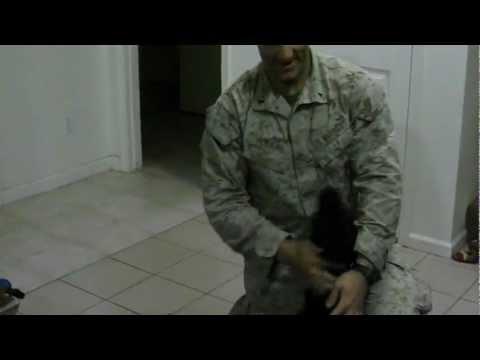 Happy Dog Welcoming Marine Home