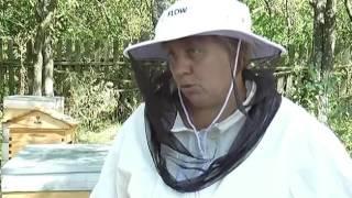 Харьковские пчеловоды добывают мед новым способом(http://objectiv.tv/080916/132638.html - Харьковские пчеловоды научились добывать мед, не открывая ульи - Специалисты Изюмско..., 2016-09-09T00:17:50.000Z)