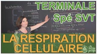 La respiration cellulaire - Spé SVT - Terminale - Les Bons Profs