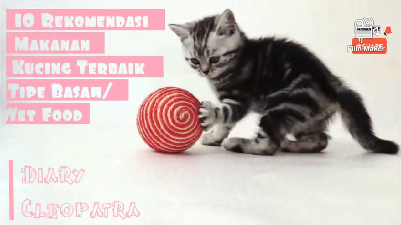 10 Rekomendasi Makanan Kucing Terbaik Tipe Basah Wet Food Youtube