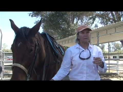 Equipment: How To Tack A Horse | Kathy Linfoot