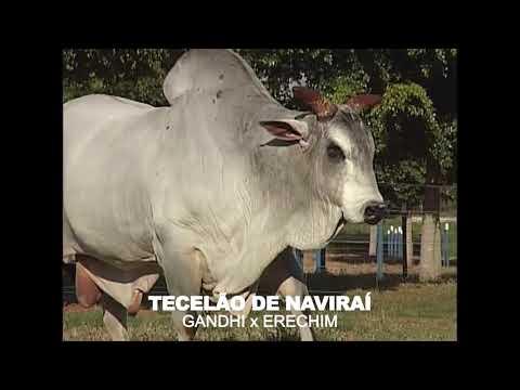 LOTE 16 - TECELÃO DE NAVIRAÍ