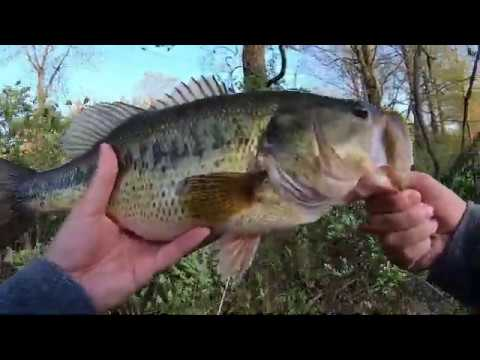 Bass Fishing In Carnegie Lake NJ. 15+ Pounds Limit. 4 May 2020