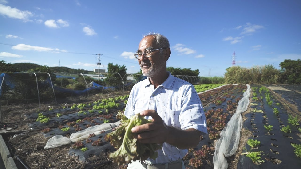 [沖縄台湾#2] Ada Farm the first specialty coffee farm in Japan // 日本初のスペシャルティコーヒー農園・安田珈琲(アダコーヒー)