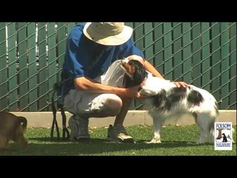 Folsom Dog Resort & Training Center - Voted BEST DOG BOARDING in Sacramento!