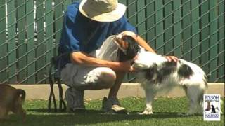 Folsom Dog Resort & Training Center - Voted Best Dog Boarding In Sacramento!