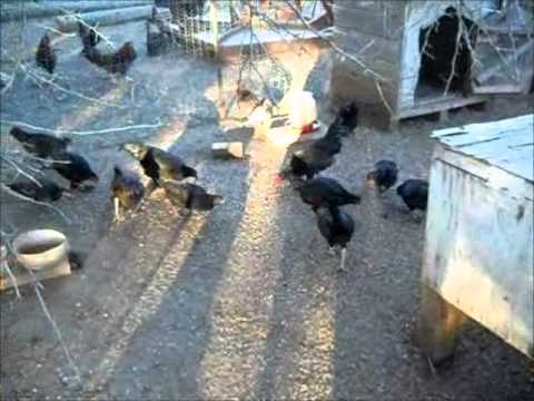 Providence's Perpetuation Provisions:  Last Chick Roundup