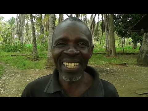 Meru farmers venture into the unusual practice of coconut farming