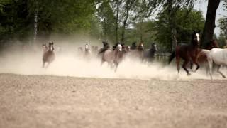 PRIDE OF POLAND 2014 Stadnina koni w Janowie Podlaskim