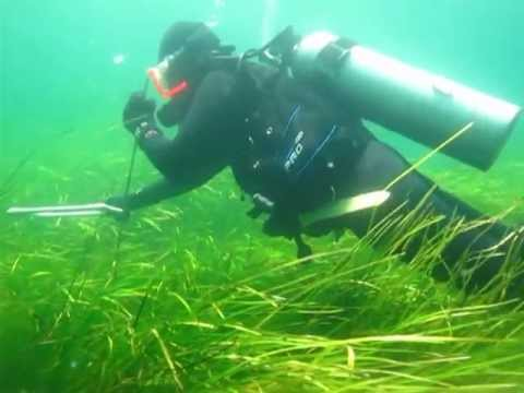 Eel grass and other marine plants flourishing on the sea flo