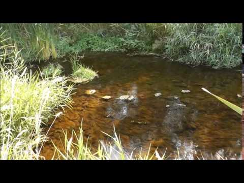 Alstown Gold 20 Acre Placer Mining Claim on Douglas Creek in Washington State from Department of Lan