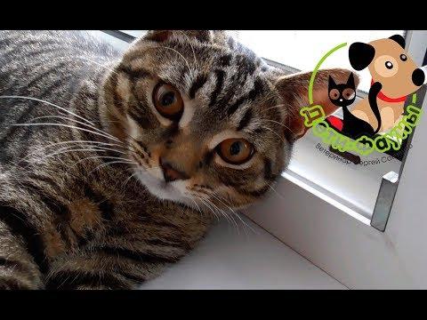 Как найти домашнюю кошку упавшую с балкона