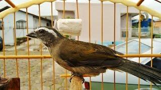Como eliminar Piolho em Pássaros,Tratamento