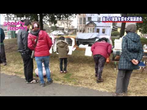 茨城新聞・茨城放送リポート(H27.3.11)