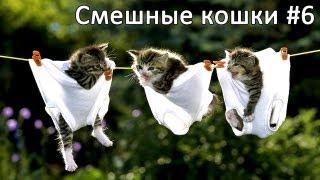 Смешные коты и кошки - видео приколы с кошками #6