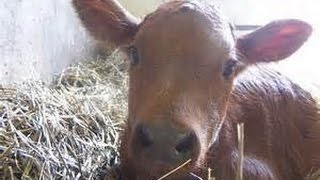 FOR KIDS: FARM ANIMALS TRACTORS WILD ANIMALS BIRDS IN ACTION