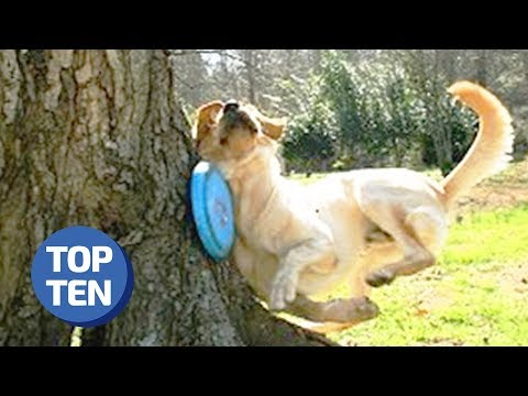 50 Funniest Animal Fails Of All Time | Daily Dose of Reddit | Hilarious Pet Fails