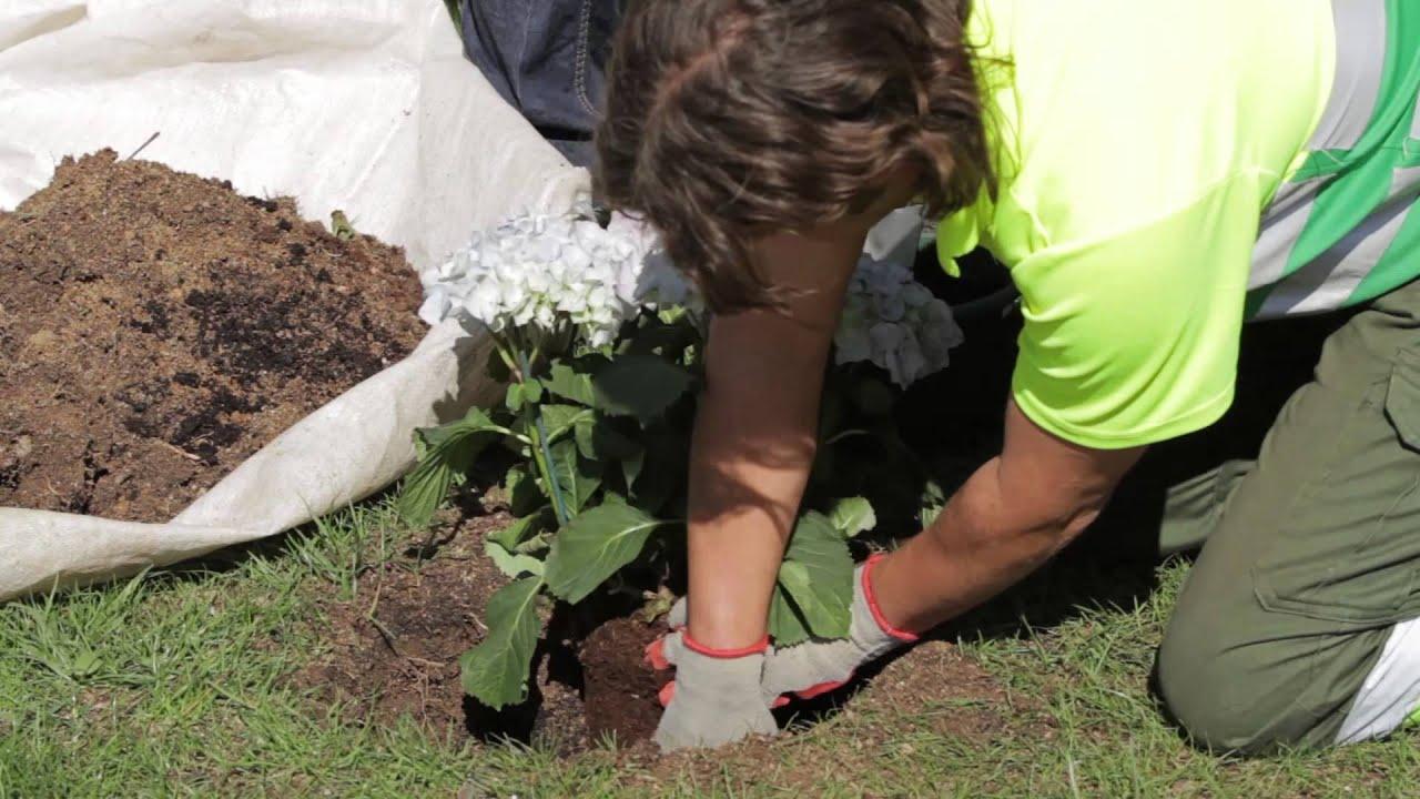Plantar flores en el jard n youtube - Plantas de jardin fotos ...